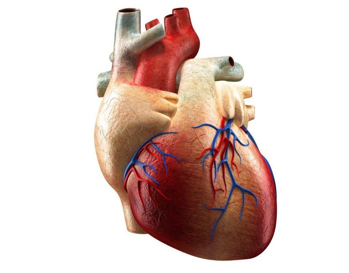 Hjertekarsygdomme dækker over en række forskellige sygdomme og lidelser, herunder blodpropper i hjertet og hjernen samt hjerneblødninger. Fra 1987 til 2000 steg antallet af danskere, der havde en hjertekarsygdom, med 1%. Foto: Scanpix. KLIK VIDERE I GALLERIET OG LÆS OM SYV ANDRE FOLKESYGDOMME