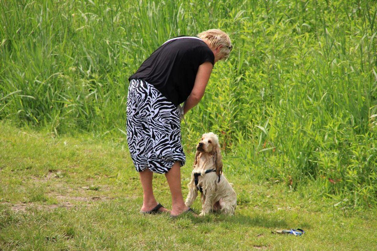 Irish Soft-Coated Wheaten Terrier. Irish Soft-Coated Wheaten Terrier