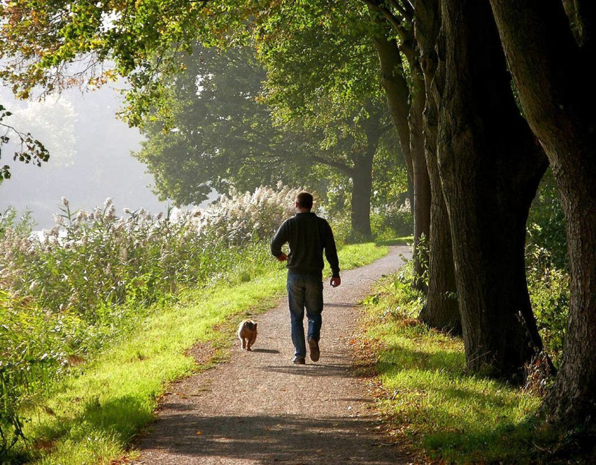 Undgå at ligge dine gåture med hunden midt på dagen, hvor solen er stærkest. Foto: Scanpix