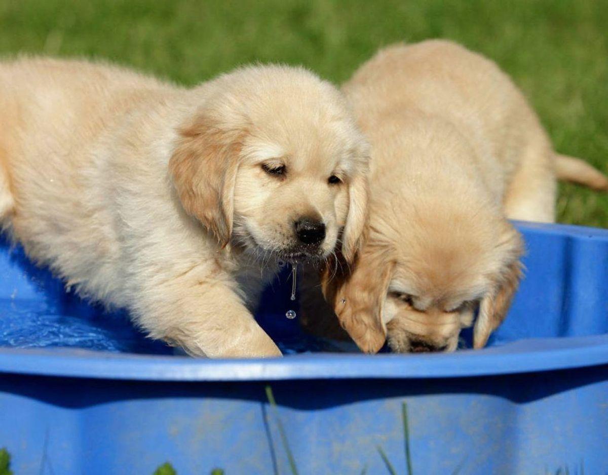 En god måde at afkøle hunden på er at lave et soppebassin. Foto: Scanpix