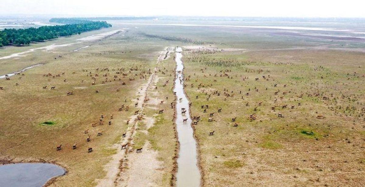 I Dafeng i Kina har en elgepark fundet vej til listen. Foto: Scanpix