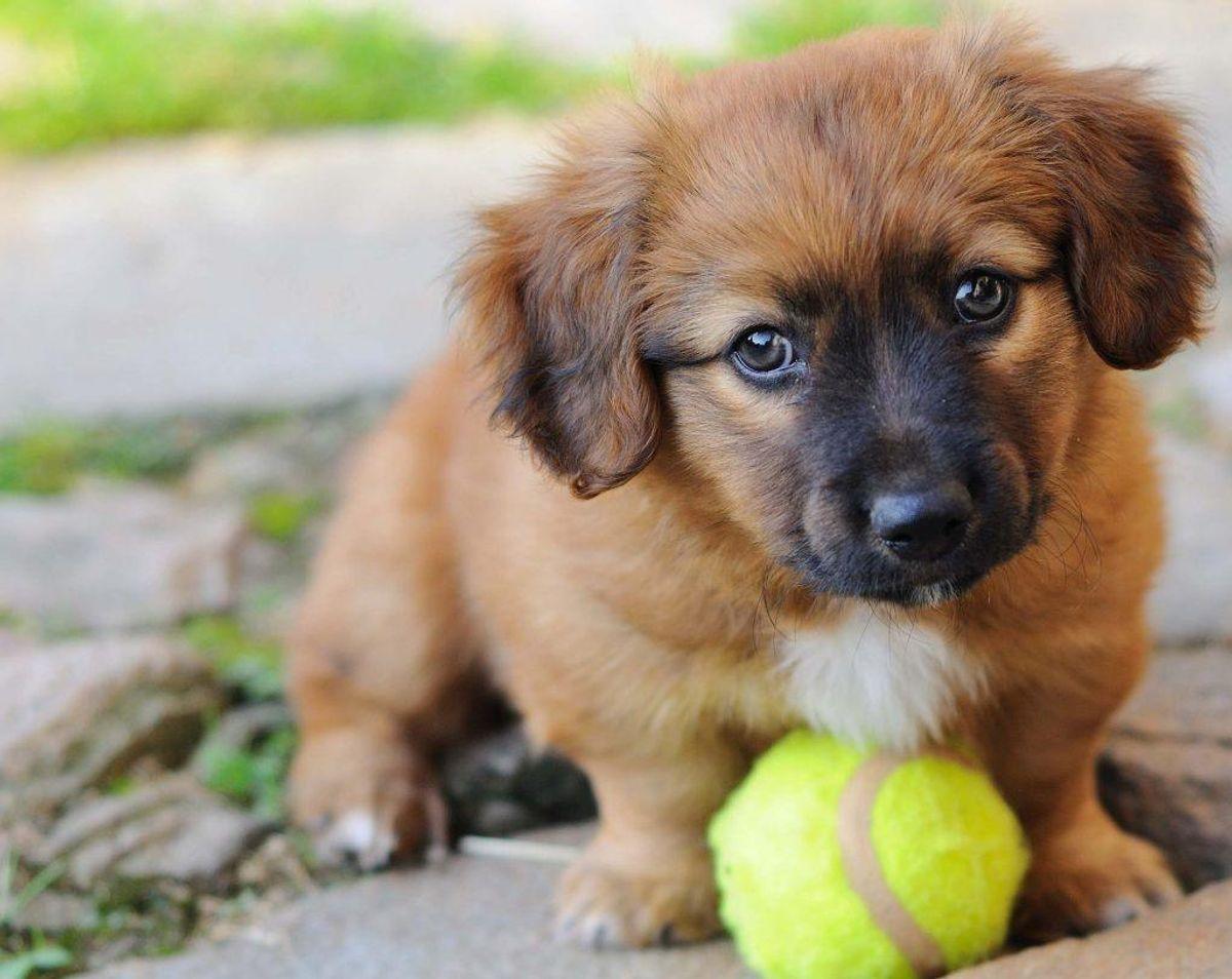Videoerne kan tage form af en sød hund – men også andre ting. Klik videre for eksempler.