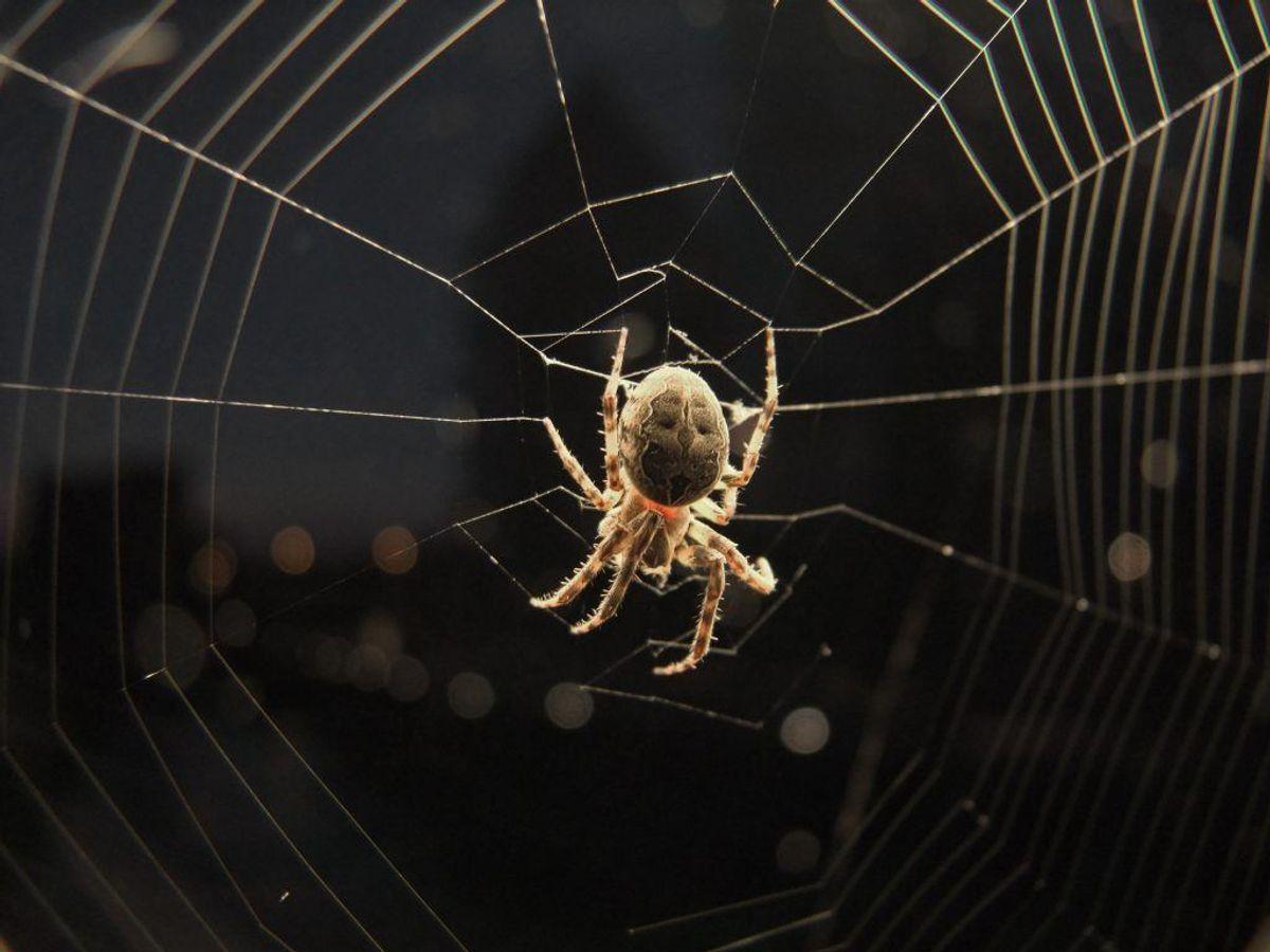 Der findes en række tips til, hvordan du får edderkopper til at holde sig væk fra dit hus. KLIK VIDERE OG SE DEM. Arkivfoto.