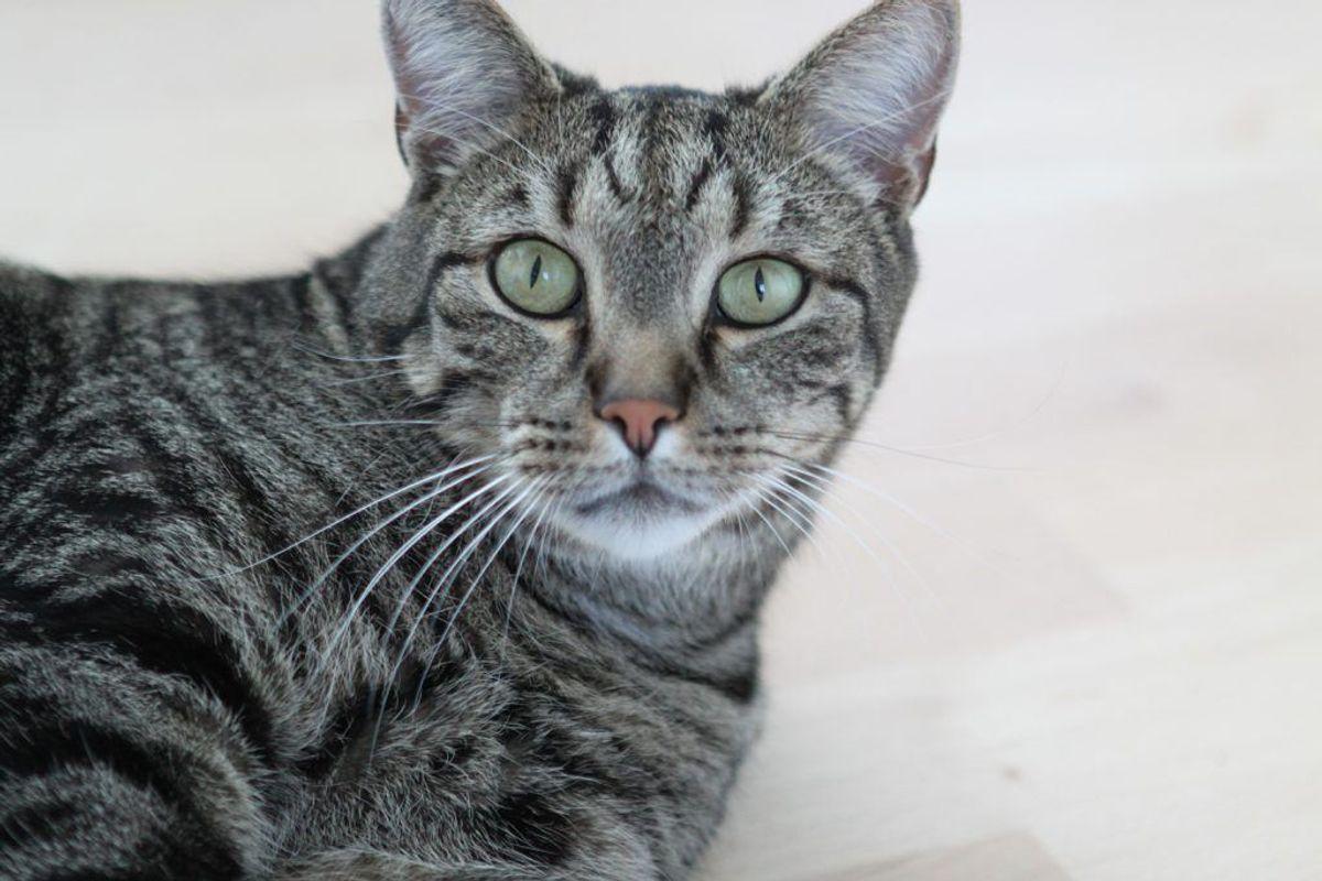 Katte er effektive edderkoppejægere, så hvis du ikke allerede har en kat, kan det være en idé at anskaffe sig en. Kilde: TV2. Arkivfoto.