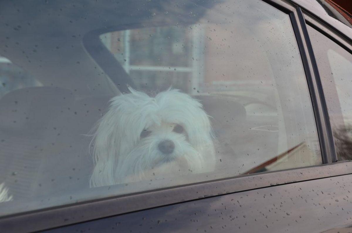 Hunde og biler er ikke den bedste kombination. Hav en fnugrulle i handskerummet. Den tager både hundehår – og børnenes krummer. Og kan nå, hvor støvsugeren ikke kan. Foto: Colourbox.
