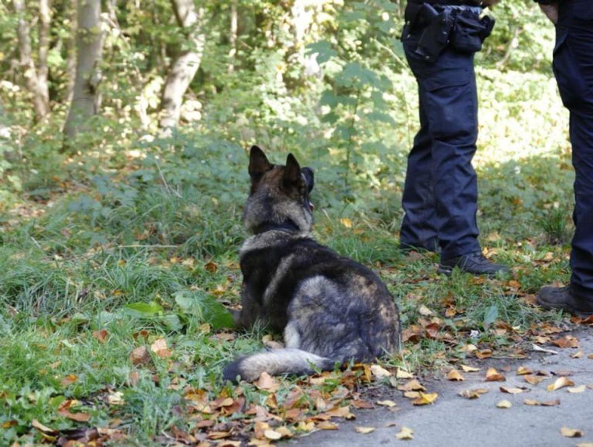 En ældre kvinde kan nu takke en politihund for, hendes bil er kommet tilbage til rette ejer. Arkivfoto: Presse-fotos.dk.