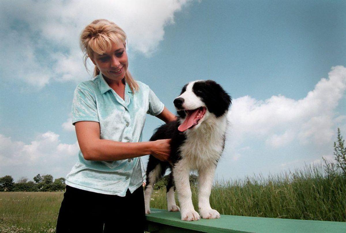 Australsk hyrdehund. Forventet levetid: 12 år. Kilde: Danske Dyreinternater. Foto: Scanpix.