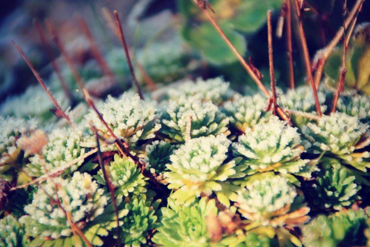 Især i det centrale Jylland og på Midtsjælland er der risiko for frostgrader fra morgenstunden. Arkivfoto.