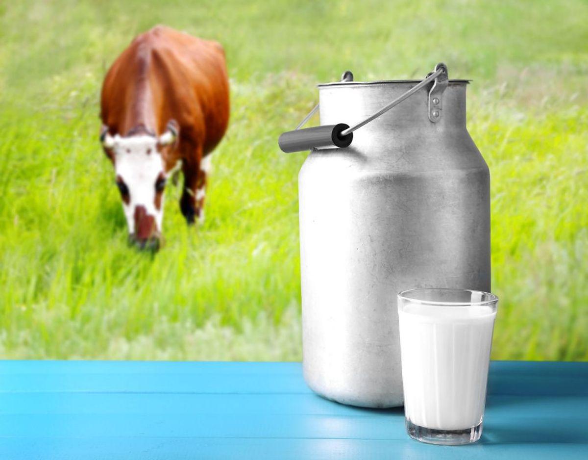 Undgå råmælk og oste fremstillet af rå mælk (upasteuriseret).
