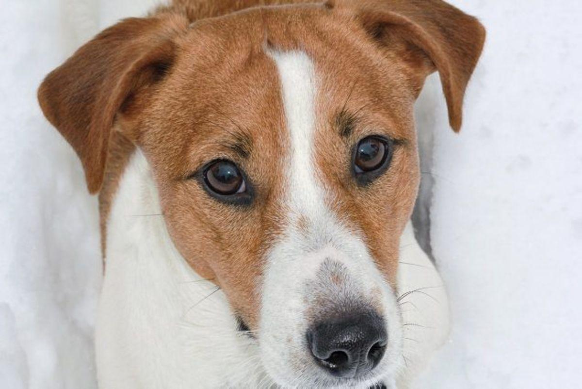 Din hund kan ikke med ord sige, hvis den har det dårligt. Men den kan prøve at fortælle det på andre måder, fortæller to dyrlæger. (Arkivfoto) Foto: Colourbox/Free