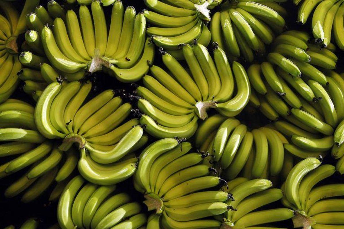 Bananer er fyldt med kalcium, hvilket er godt for dig. Det hjælper med at omsætte næring i kroppen. Foto: Scanpix