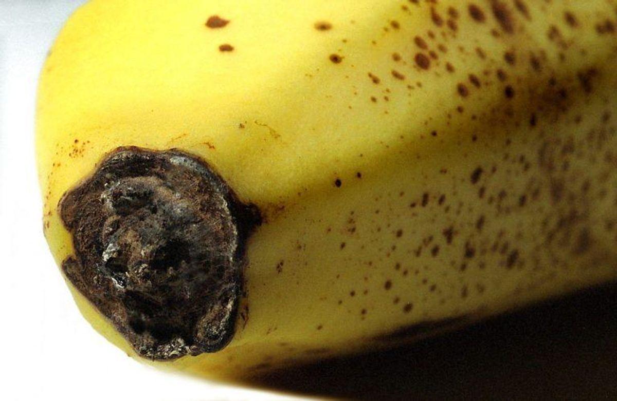 Hvis du spiser mange bananer, så forbliver du også  i væskebalance. Foto: Scanpix