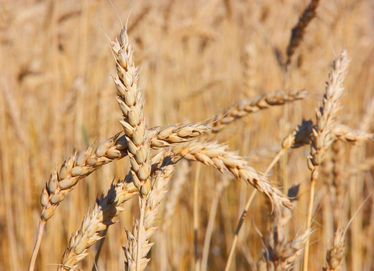 Er man rigtigt med på noderne kan man bruge CMA, der er fremstillet af hvedekorn. Det skader ikke miljøet.