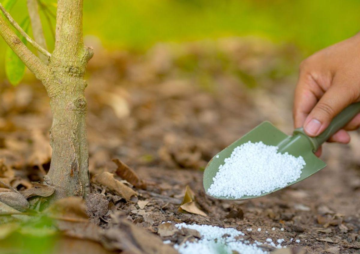 Gødningsmidlet urea er skånsomt mod planter og virker ned til minus 4 grader.