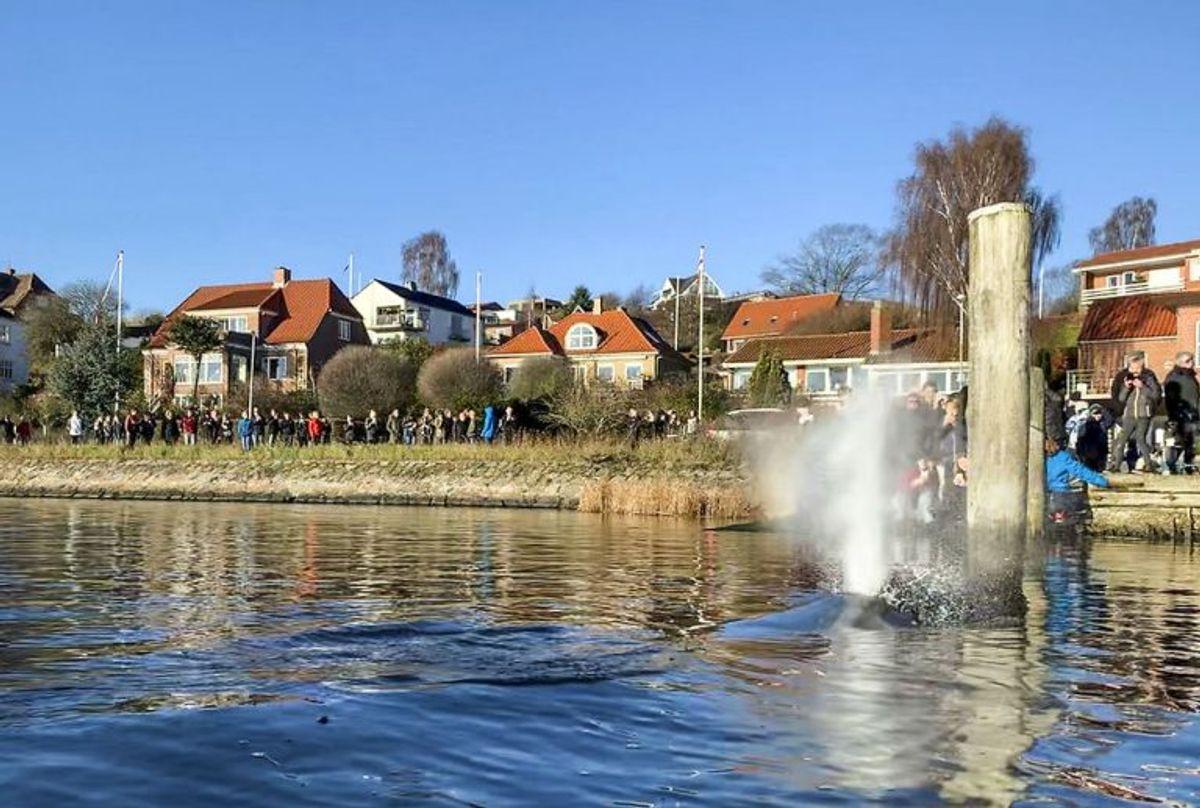 En 8-10 meter lang hval er ligger i Hobro Havn i Mariager Fjord tirsdag den 27. november 2018. Se billeder af hvalen her.. (Foto: Annelene Petersen/Ritzau Scanpix)