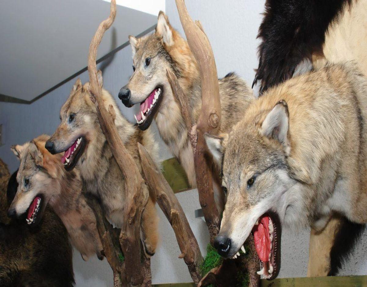 At konservere dyr skaber også en vis grad af uhygge viser undersøgelsen. Det er det næstmest uhyggelige job. Foto: Colourbox