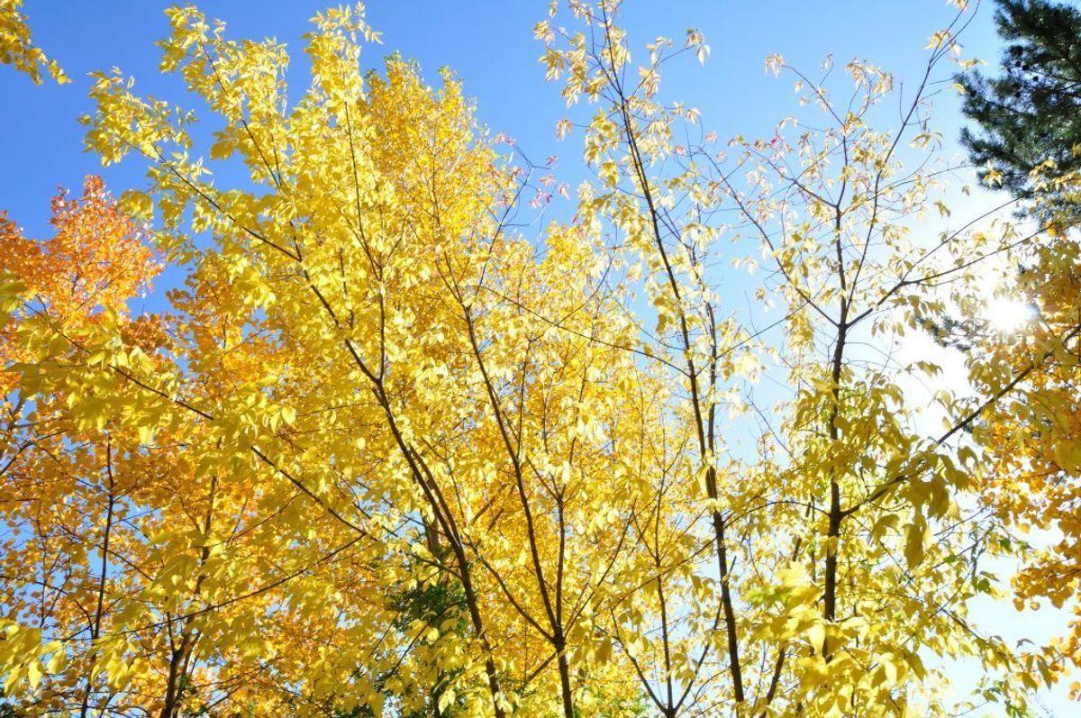 Begreber som løvfaldssommer og indian summer bliver brugt i flæng om det, at der er sommerligt vejr om efteråret. KLIK VIDERE OG SE, HVORNÅR DER SIDST HAR VÆRET LØVFALDSSOMMER I DANMARK. Arkivfoto.