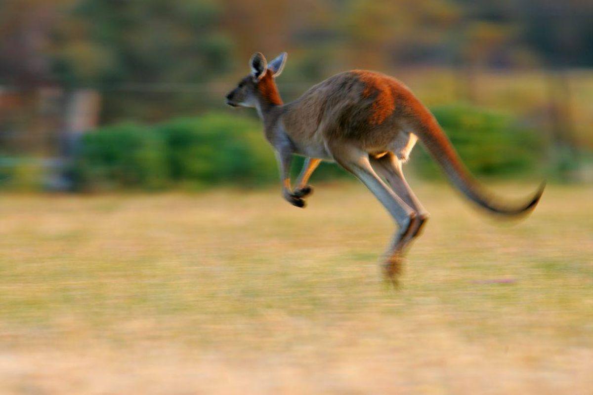 Det er vigtigt at huske at ansøge om visum til Australien, før man tager afsted. Arkivfoto.