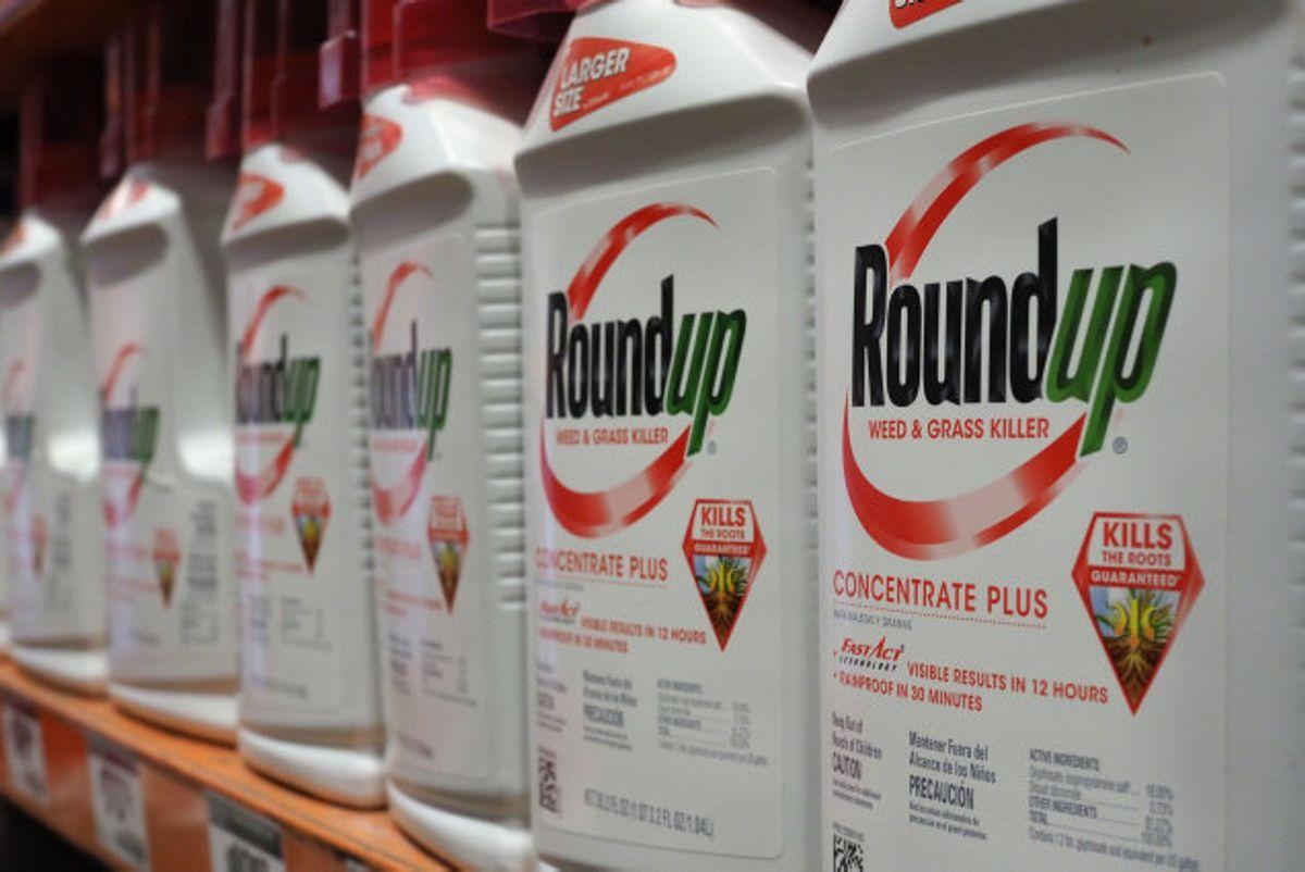 Landmænd skal se bort fra pesticidet glyfosat – også kendt som produktet Roundup – efter første spiring hos konsumafgrøder. Foto: Robyn Beck/AFP