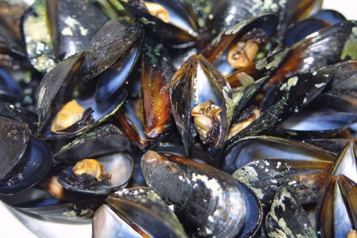 Levende muslinger/østers, æg, ægprodukter, honning, snegle eller frølår: Højt to kilo per person. Foto: Colourbox.