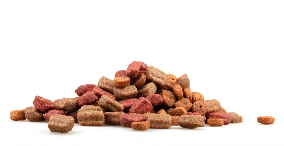 Forarbejdet foder til hunde, katte og fritter (fx tyggeben,  dåsefoder og blandinger, som indeholder kød eller mælk): IKKE tilladt – af medicinske årsager: Dog to kilo per person. Foto: Colourbox.