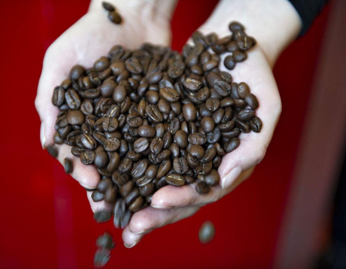 Danskerne elsker arabica-kaffe og op mod 75 procent af alle bønner solgt i Danmark er arabica. En ny britisk undersøgelse peger på, at der i nogle lande svindles med kaffen, så nu vil Fødevarestyrelsen her hjemme undersøge tilstanden. Tidligere er andre fødevareskandaler afsløret. Det kan du se her i galleriet. Foto: Scanpix