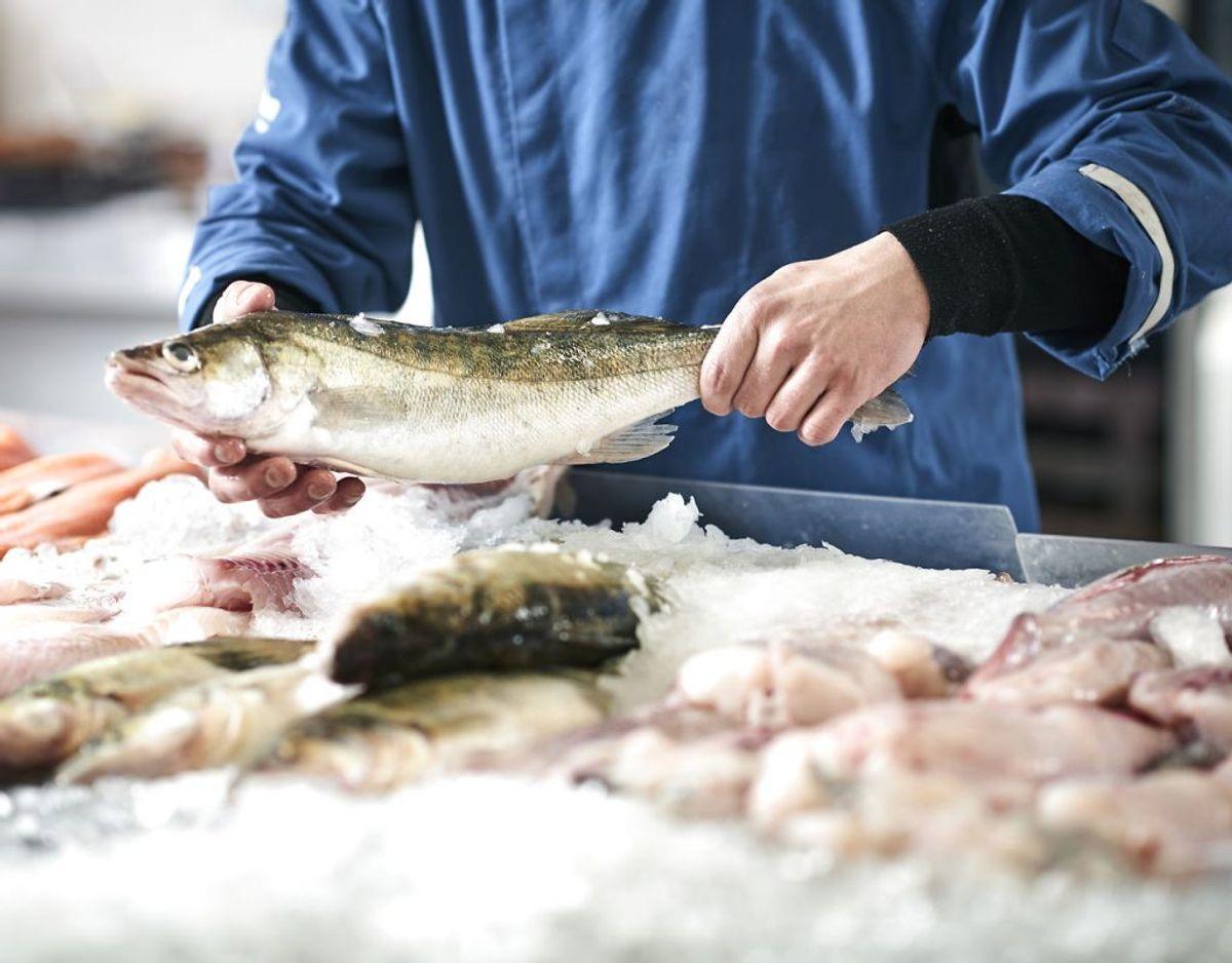 Fisk kan i udgangspunktet godt fryses. Fed fisk holder dog ikke ret længe i fryseren. Fisk er med på listen, fordi det ikke må genindfryses. Har det været tøet op, skal du spise det – eller smide det ud. Foto: Scanpix