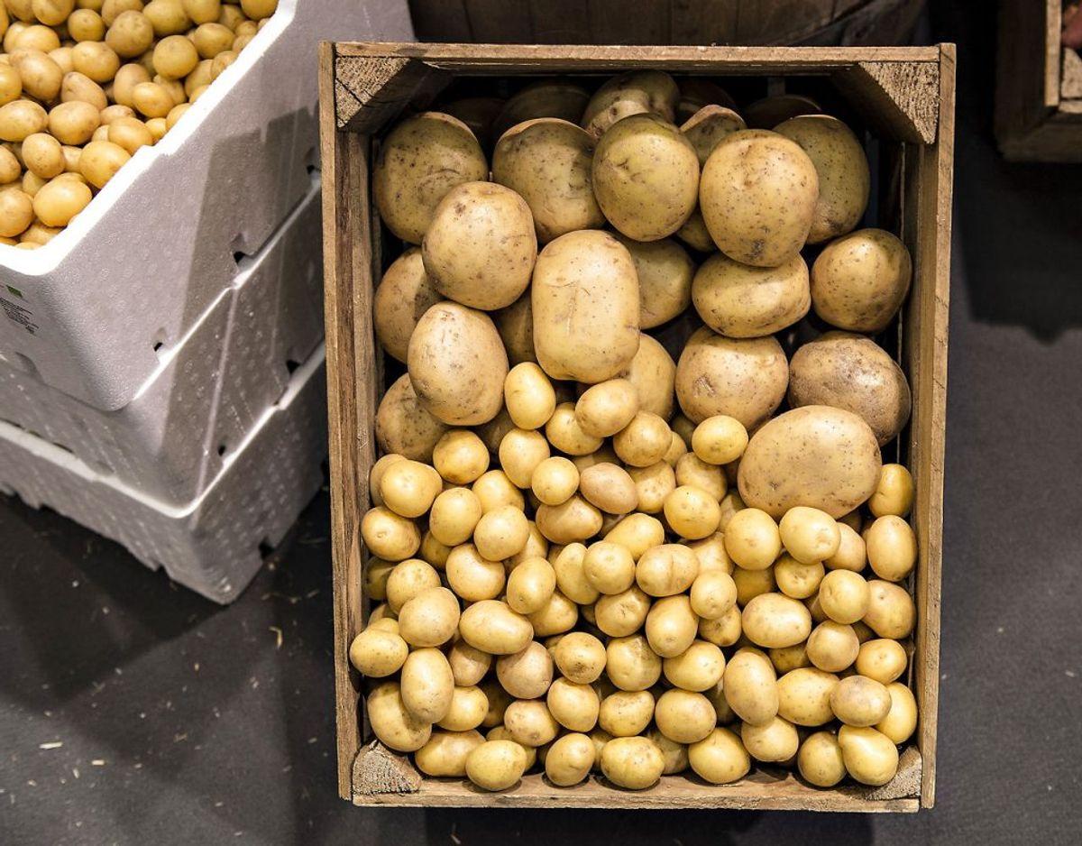 Stivelsen i kartofler bliver til sukker, hvis de kommer rå i køleskabet, og bliver de så stegt eller friteret kan det ende med, at det meget farlige stof akrylamid udvikles. Foto: Scanpix