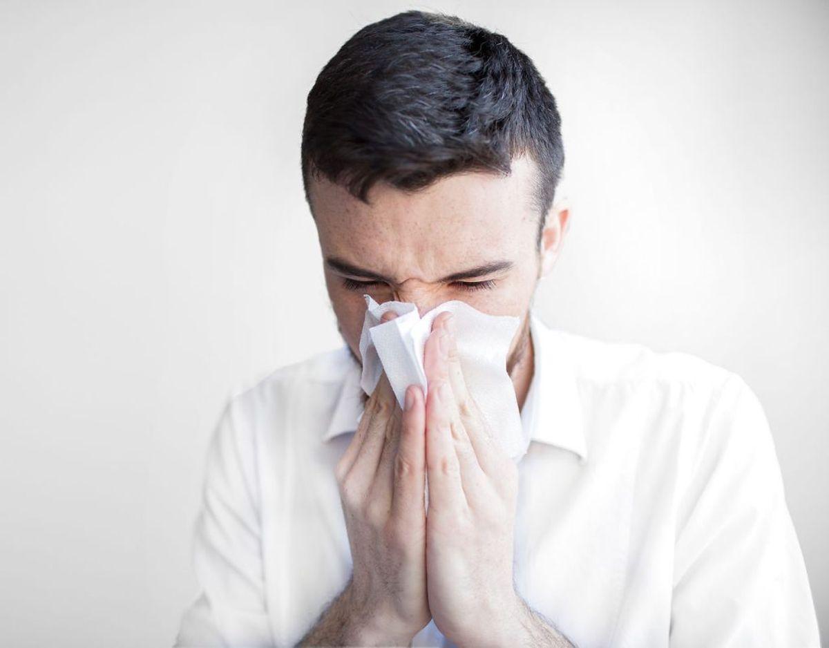 Luftvejasallergi kendes som langvarig forkølelse, kløende øjne og næse, høfeber, nysen og besværet vejrtrækning. Foto/kilde: Scanpix/Politiet.