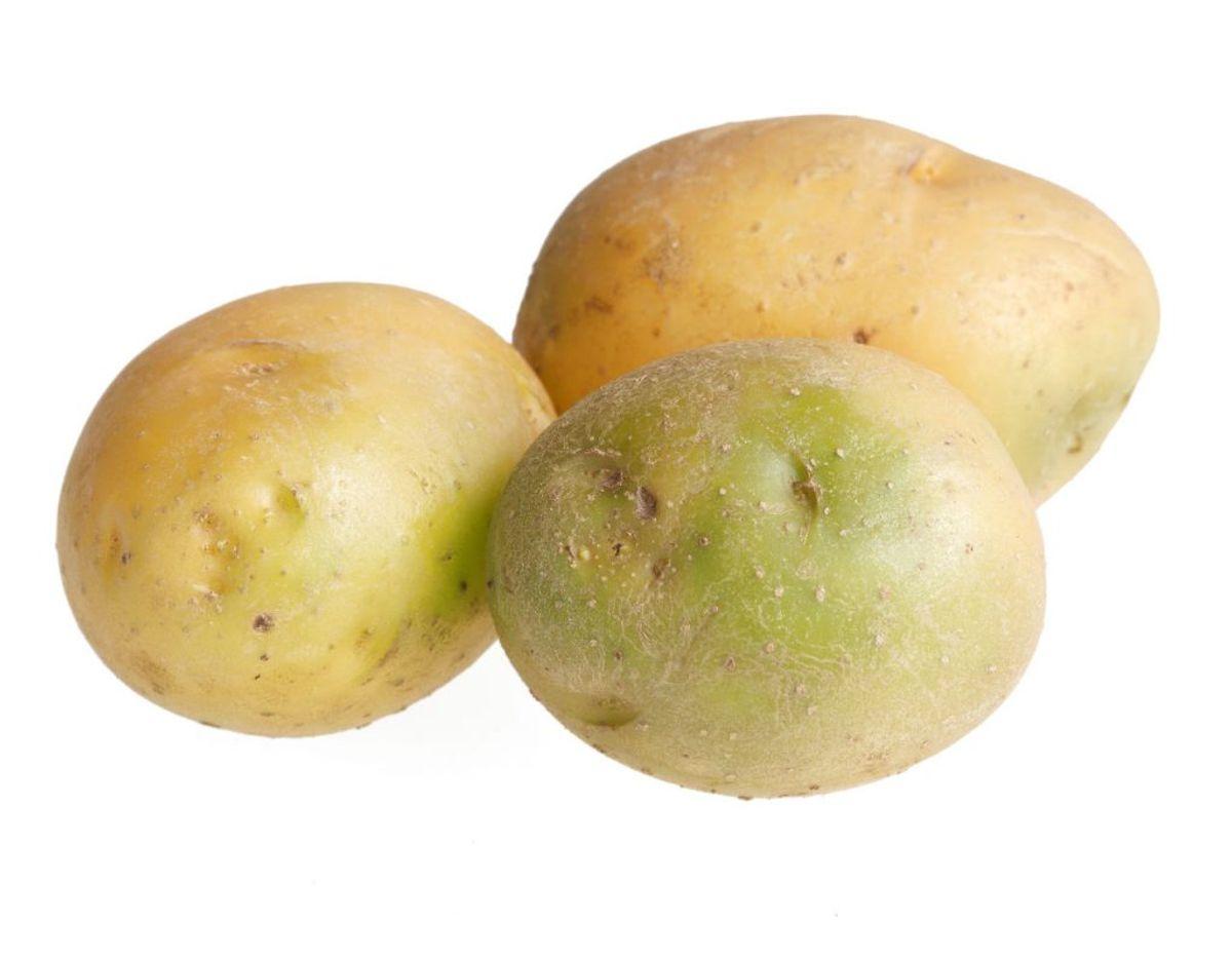 Du må ikke spise grønne kartofler – simpelthen fordi det er farligt. KLIK videre og læs hvad det gør. Fotos: Scanpix / Kilde: DTU