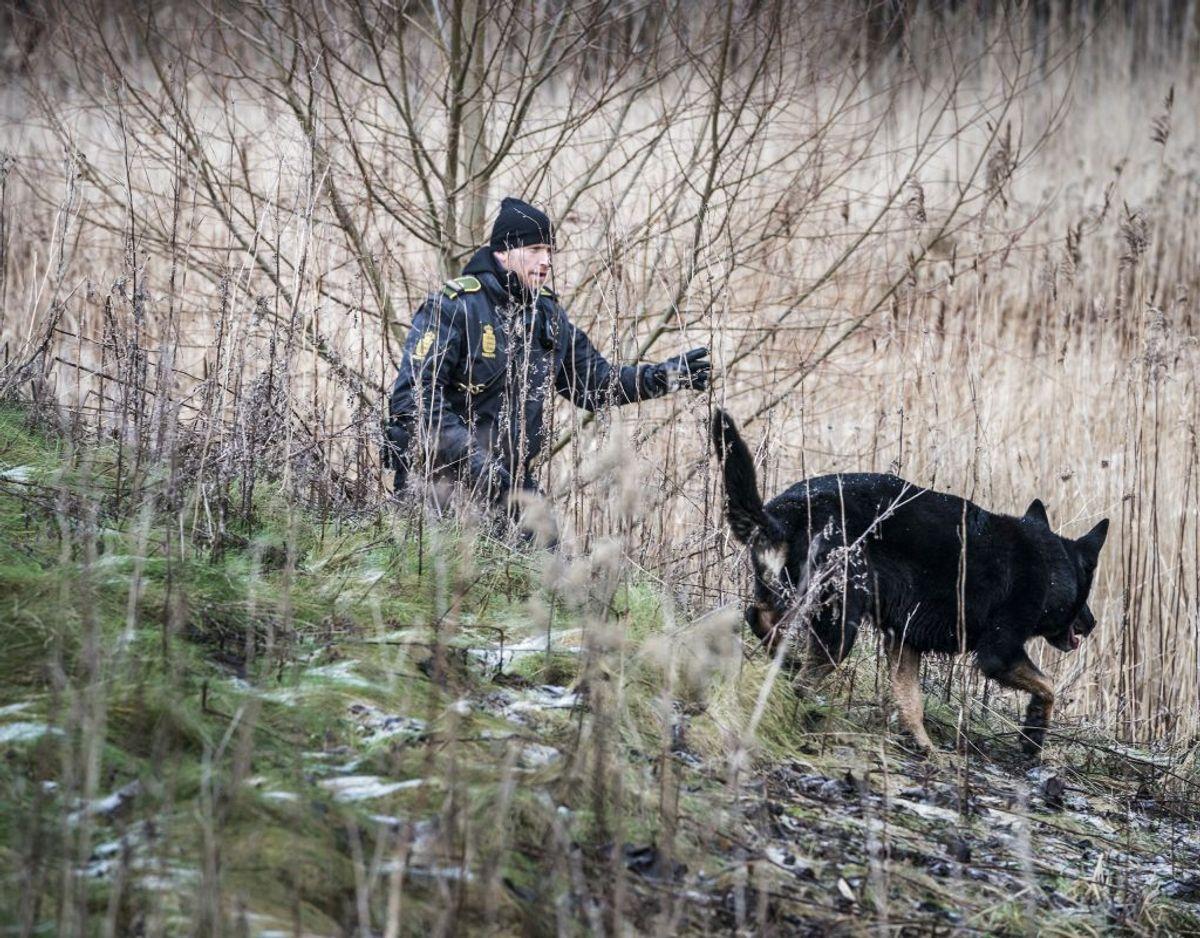 Op mod 30 hunde deltog i dagens eftersøgning. Foto: Martin Sylvest/Scanpix.
