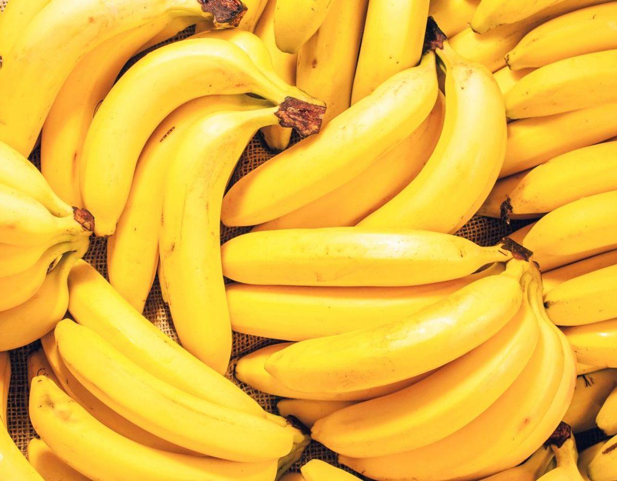 Bananer tåler ikke kulde. De skal derfor opbevares ved stuetemperatur. Foto: Scanpix.
