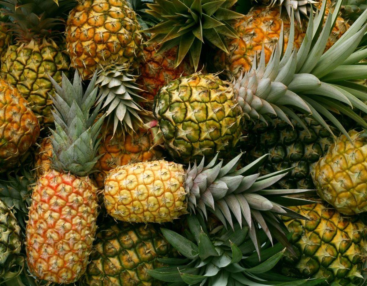 Ananas risikerer at rådne, hvis du opbevarer dem på køl. De skal derfor ligge et sted, hvor der er stuetemperatur. Foto: Scanpix.