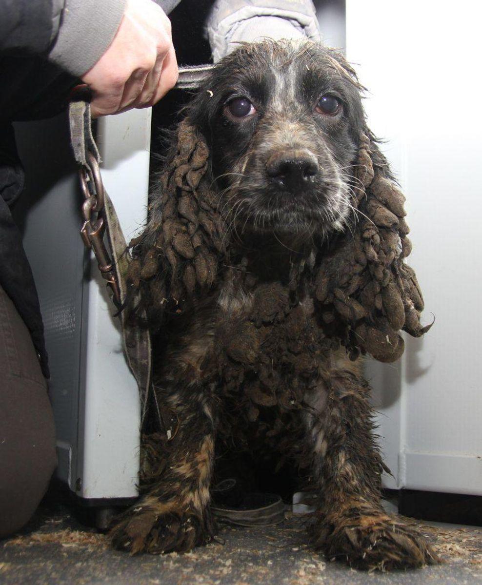 Hundene var smurt ind i skidt. Foto: Dyrenes Beskyttelse.