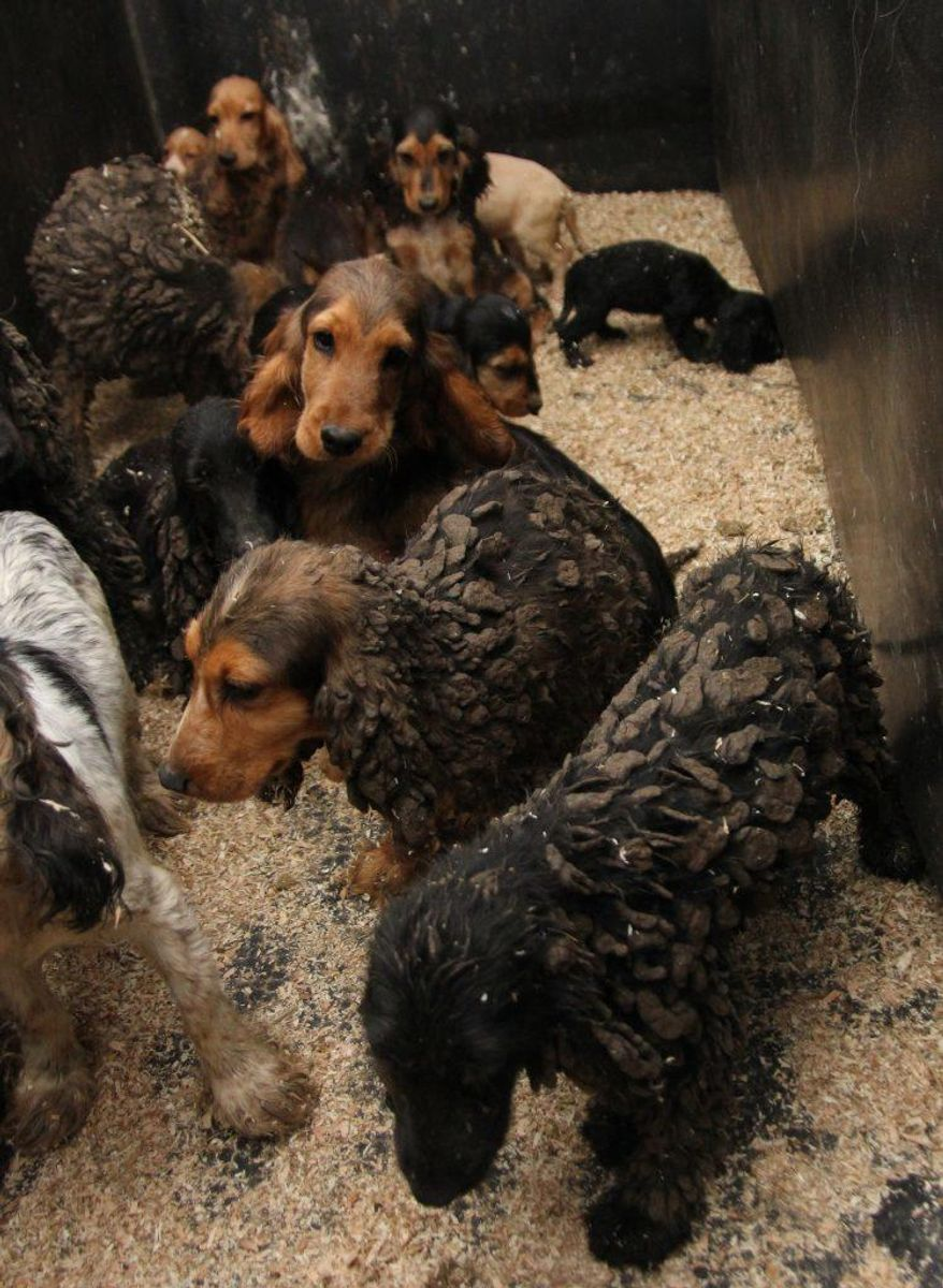 En del af de mange hunde boede på meget lidt plads. Foto: Dyrenes Beskyttelse.