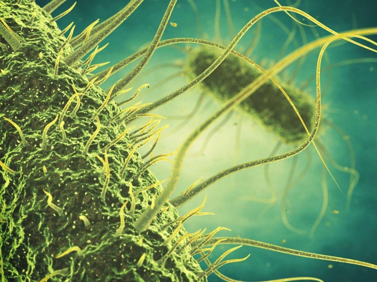 Som så mange andre bakterier ser salmonella alien-agtig ud helt tæt på. Ved du hvor mange typer fødevarer, du kan blive smittet med den fra? Foto: Scanpix. GALLERI: DISSE FØDEVARER KAN SMITTE MED SALMONELLA.