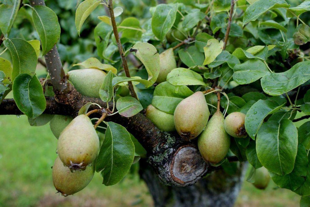 2: Vælg dansk frugt og grønt, som generelt har færre pesticidrester på og i sig end importerede.