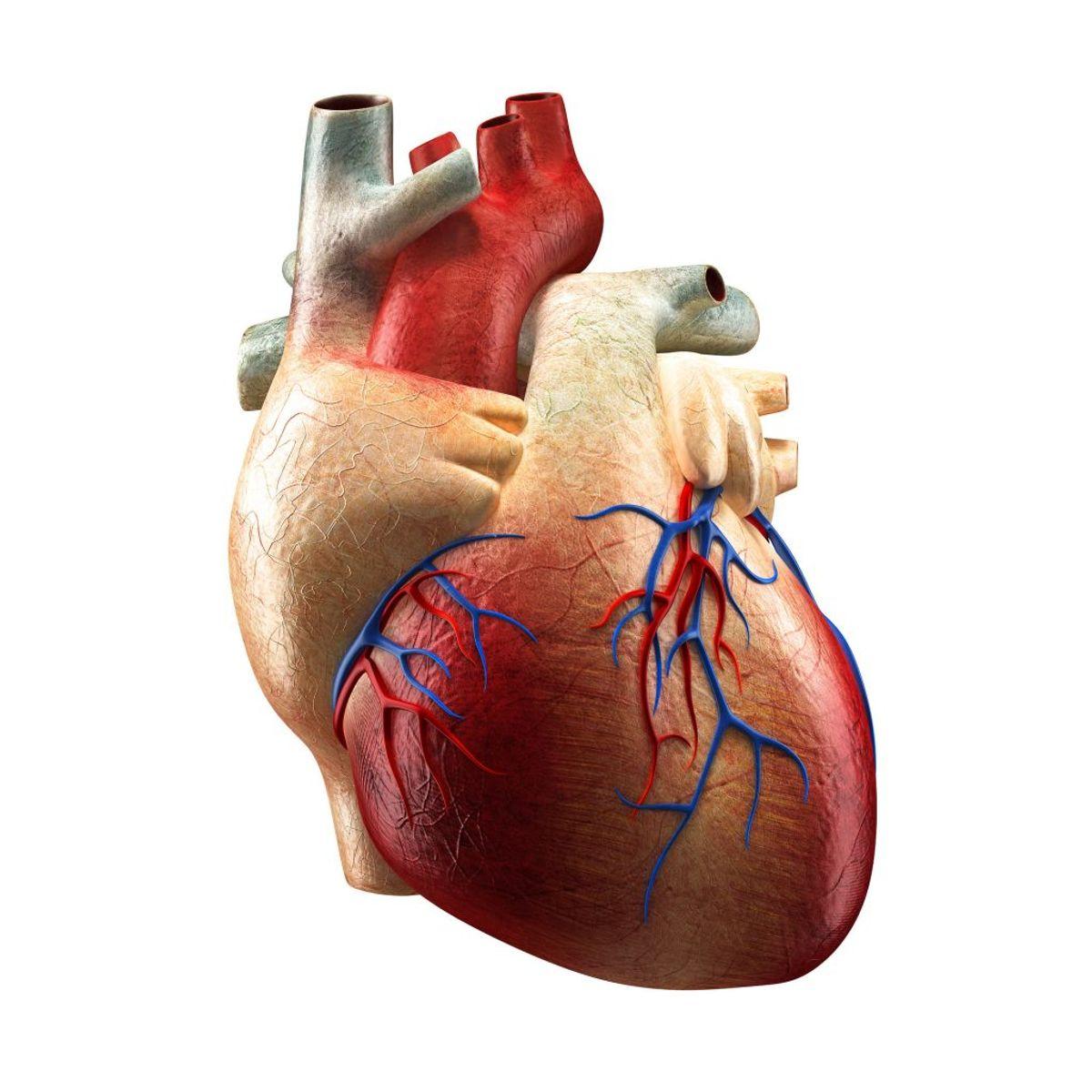 Hjertekarsygdomme dækker over en række forskellige sygdomme og lidelser, herunder blodpropper i hjertet og hjernen samt hjerneblødninger. Fra 1987 til 2000 steg antallet af danskere, der havde en hjertekarsygdom, med 1%. Foto: Scanpix.