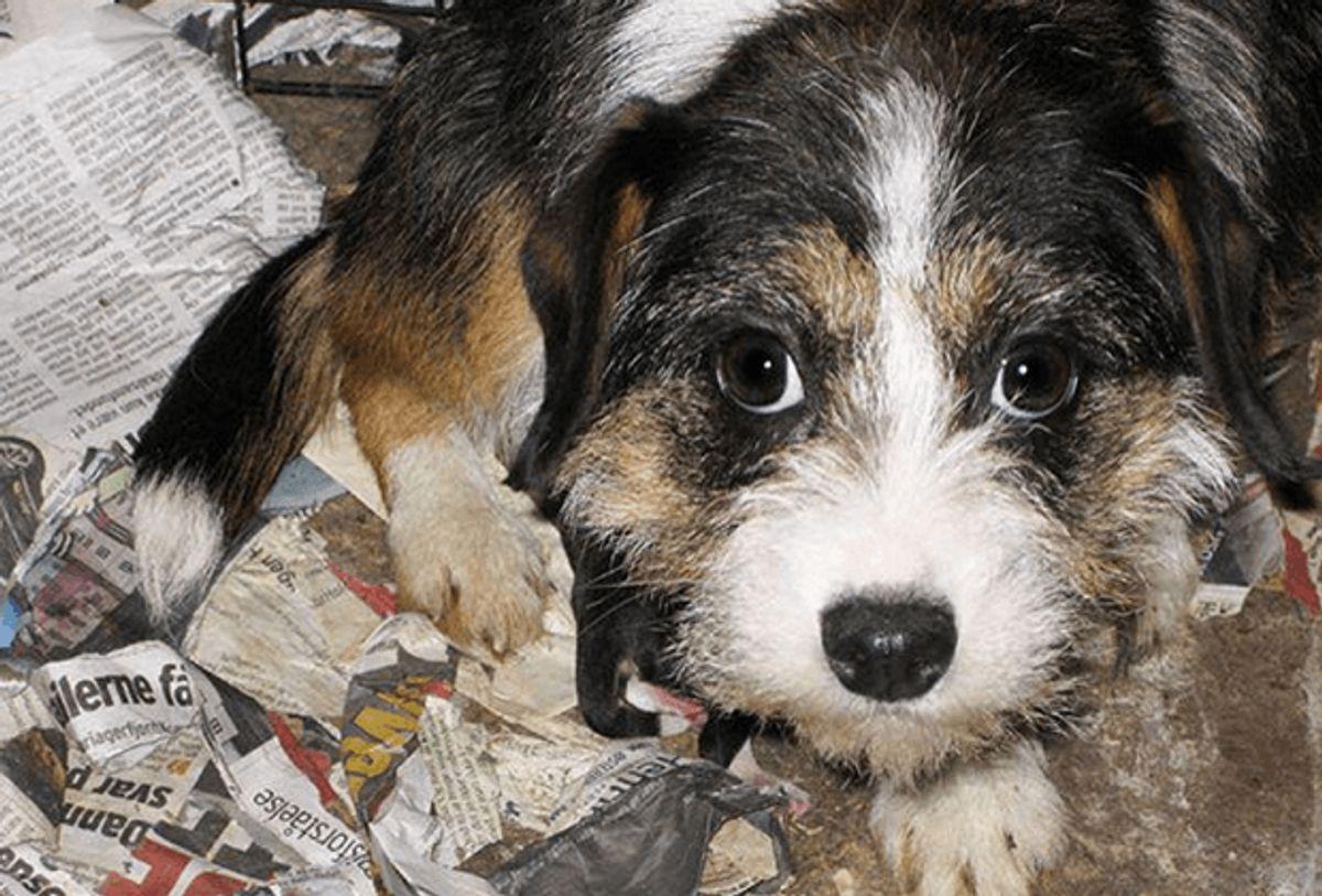 Denne hund er en af de overlevende fra det første besøg. Foto: Dyrenes Beskyttelse.