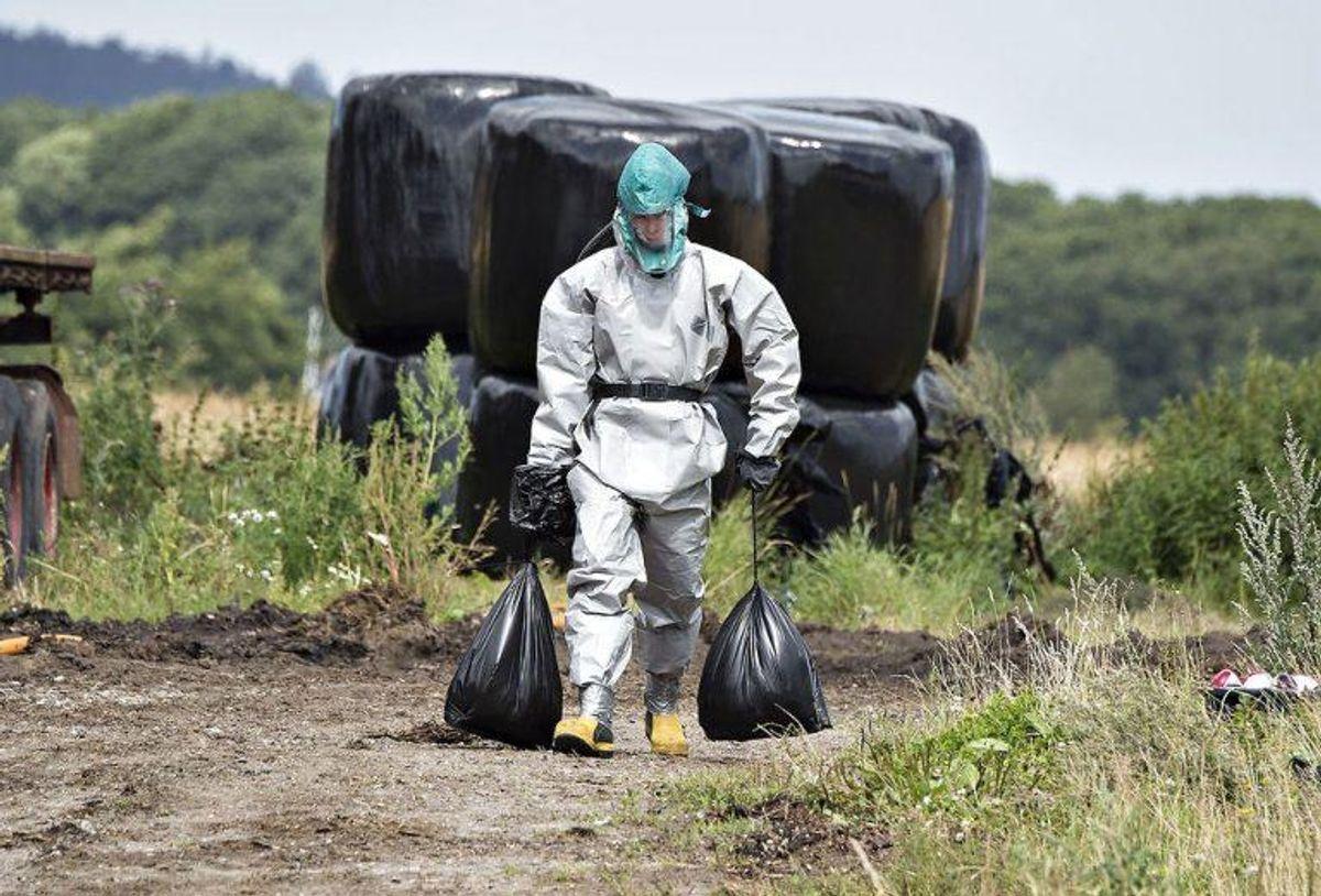 Fugleinfluenza H5N1 er fundet i døde fugle på dansk grund. Foto: Henning Bagger/Scanpix 2016