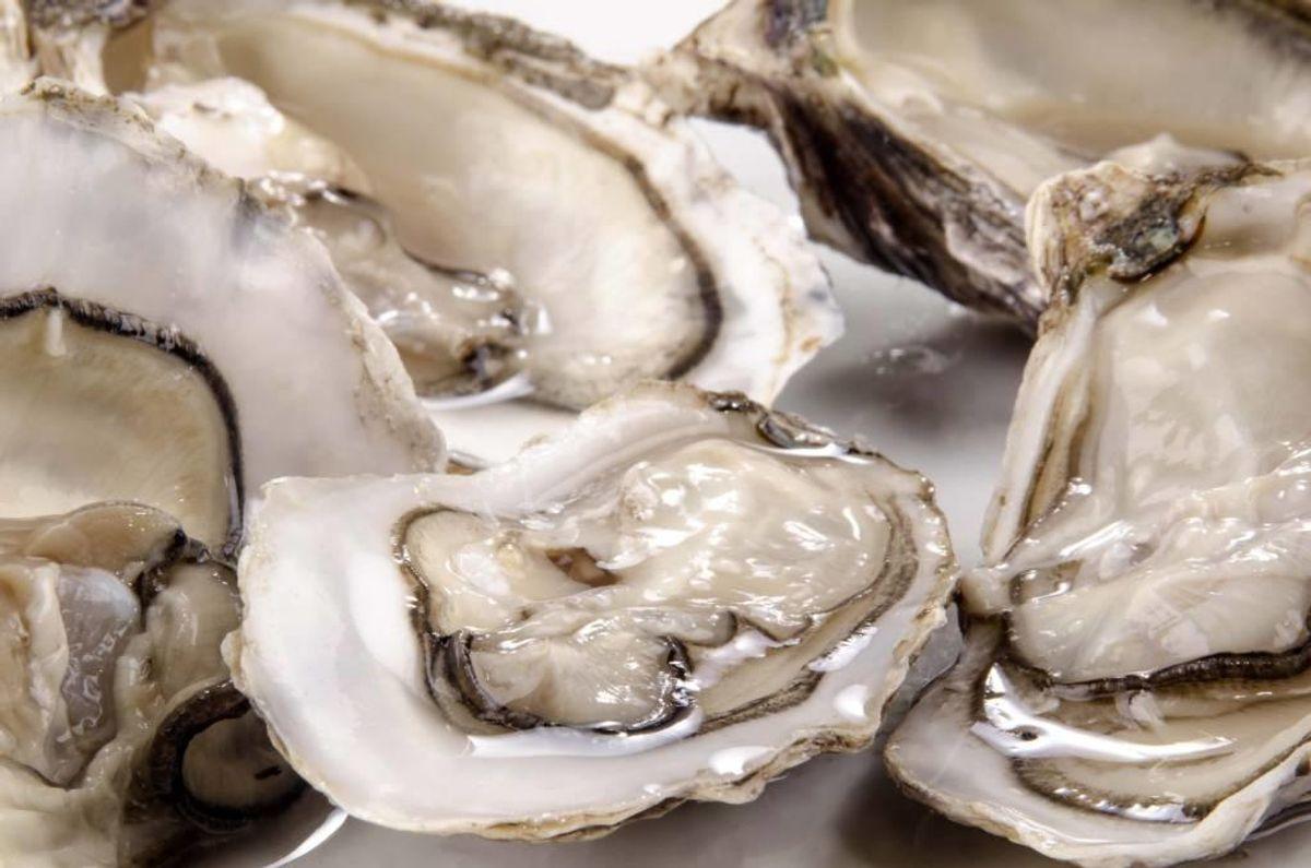 Der er fundet algegift i muslinger og østers i Horsens Fjord. Derfor frarådes forbrugere at indsamle dem. Foto: Colourbox.com (Modelfoto)