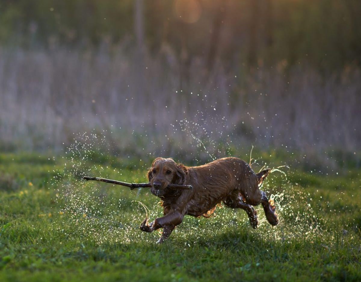 Luft hunden tidligt om morgenen eller sent om aftenen, hvor der er færrest pollen i luften. Klik videre og se råd nummer 3.