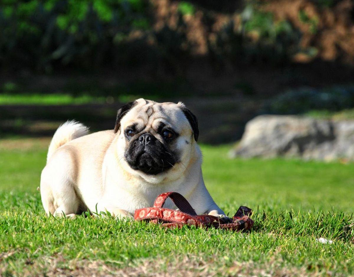 Luft ikke hunden, når græsset er nyslået.