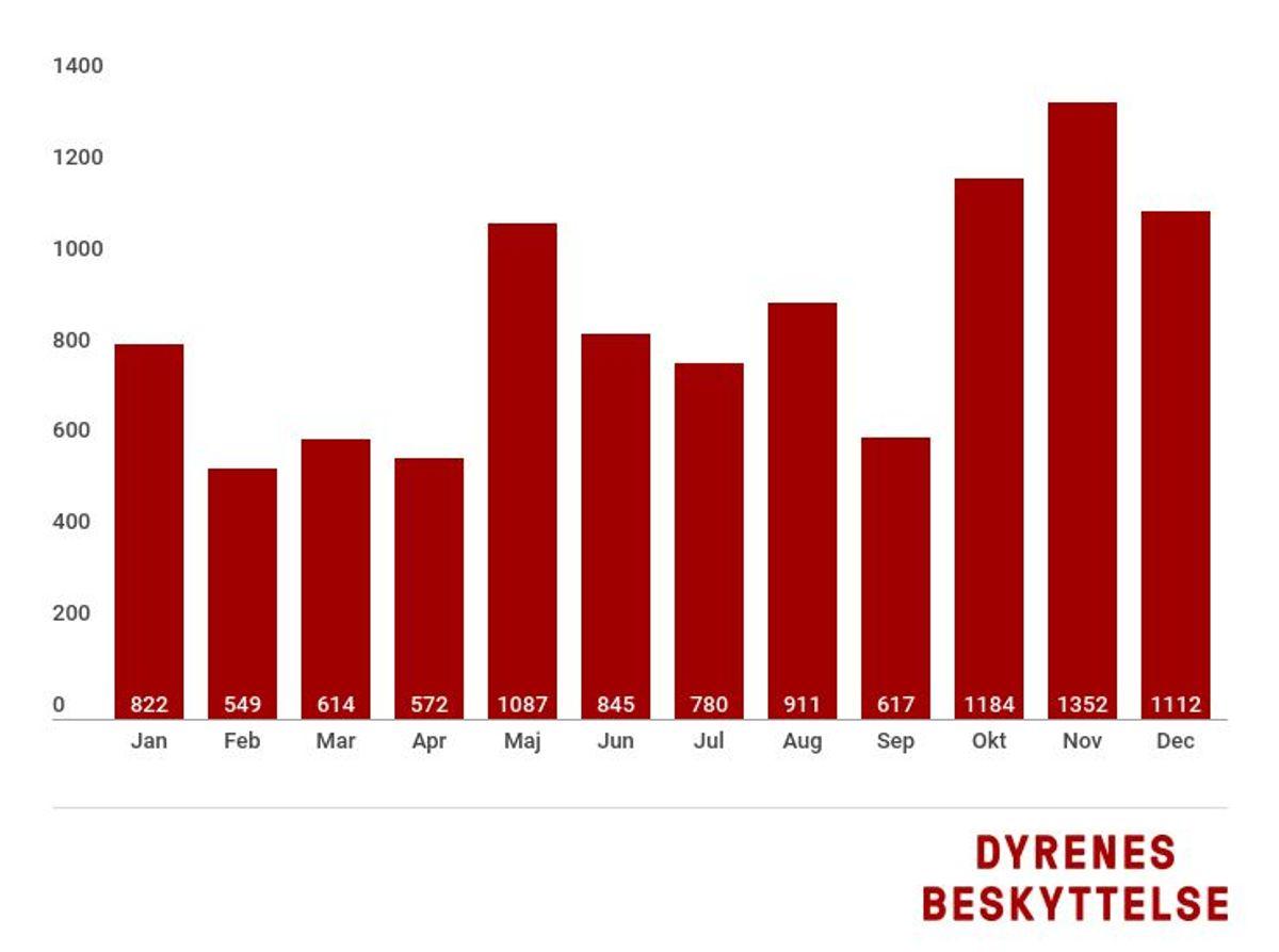 Sådan ser det ud, fordelt på måneder. KLIK for flere råd. Kilde: Dyrenes Beskyttelse.