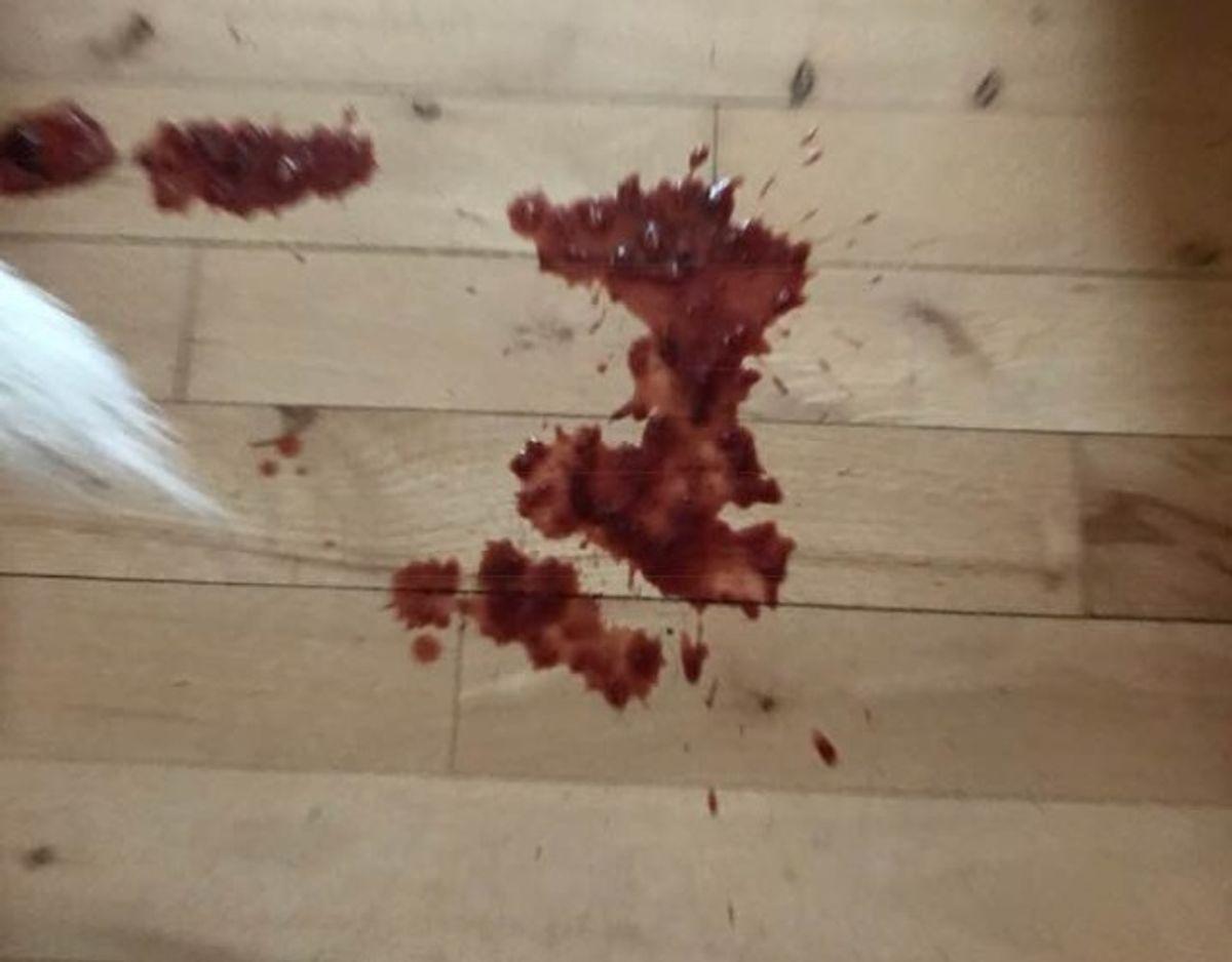 Rørte man ved Teddys mave, stod der blod ud af enden på ham. Foto: Privat.
