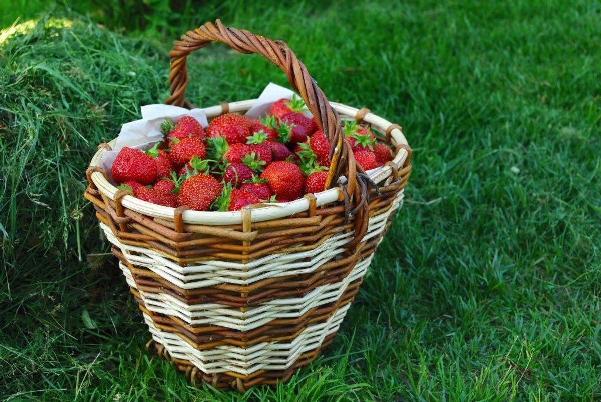 3: Køb sæsonens friske råvarer af frugt og grønt.