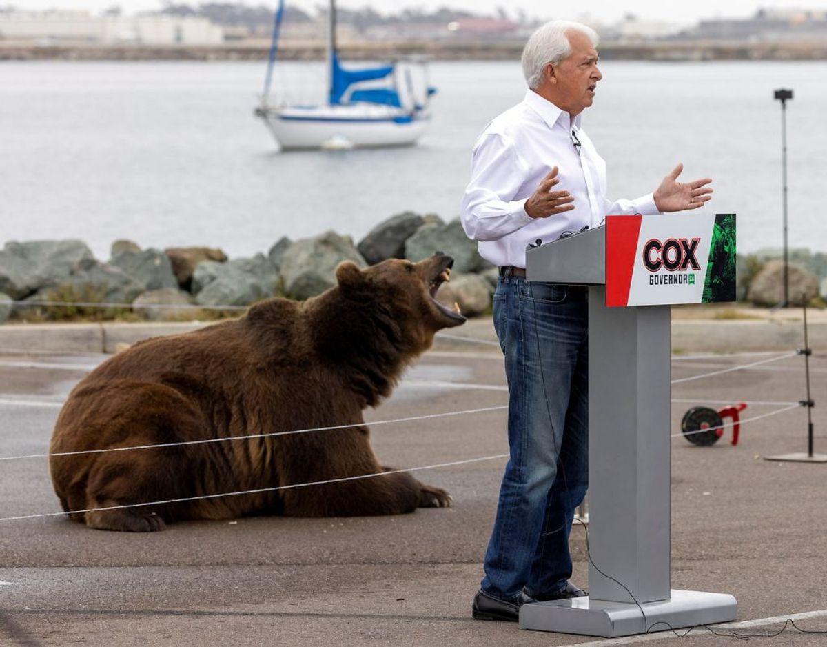 Politikeren John Cox har en bjørn med i sin valgkamp. Foto: Scanpix/Mike Blake