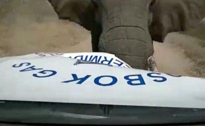 Voldsomt ser det ud, da elefanten angriber bilen.