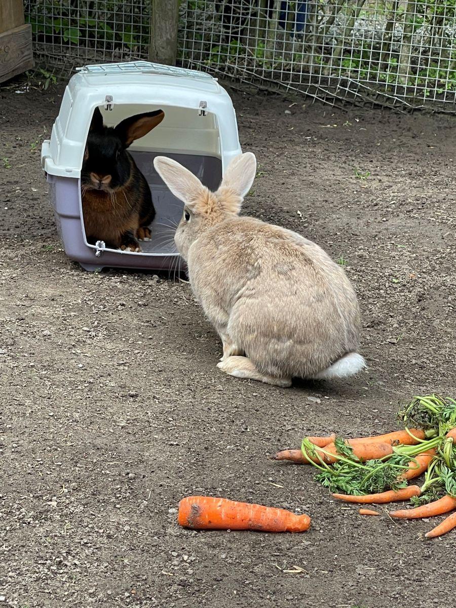 Det er et frygteligt tab for medarbejderne i dyreparken, at flere af deres kaniner er blevet dræbt, fortæller dyrepasser Anette Jensen. Foto: Dyreparken NBV