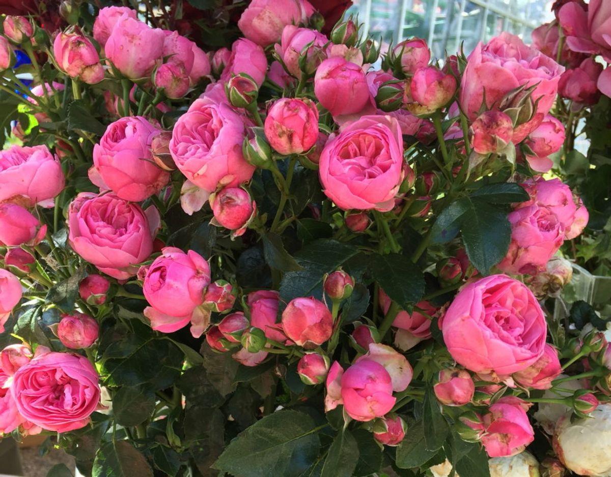 Sådan ser Korsbæk/The Matador ud. Foto: Roses Forever.